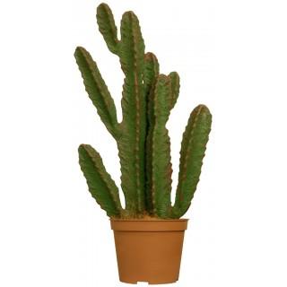 Искусственное растение Кактус Рубер