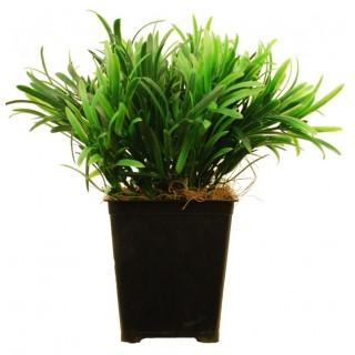 Искусственное растение Самшит в кашпо