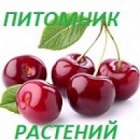 Интернет-магазин:  Продажа плодовых, декоративных и хвойных  растений с доставкой по России