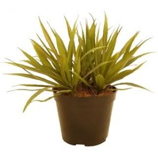 Искусственное растение АГАВА