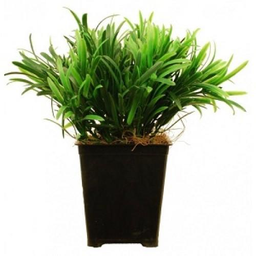 Самшит Искусственное растение в кашпо купить в Краснодаре