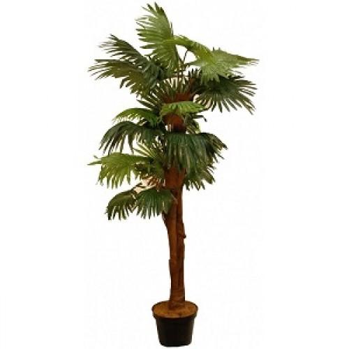 Вашингтония искусственная пальма купить в Краснодаре