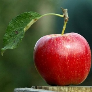 Яблоня Прикубанское Саженец в кашпо 3-х летний