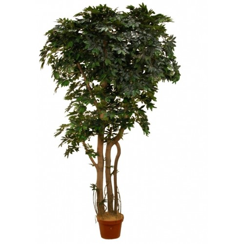 Личи Искусственное дерево в кашпо купить в Краснодаре